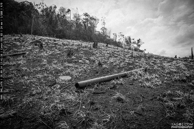 Paraguay_Deforestation