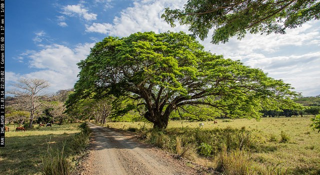 Tree of Life: PermaTree