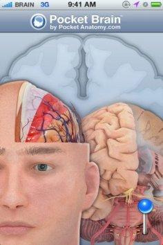 pocket brain ios 1