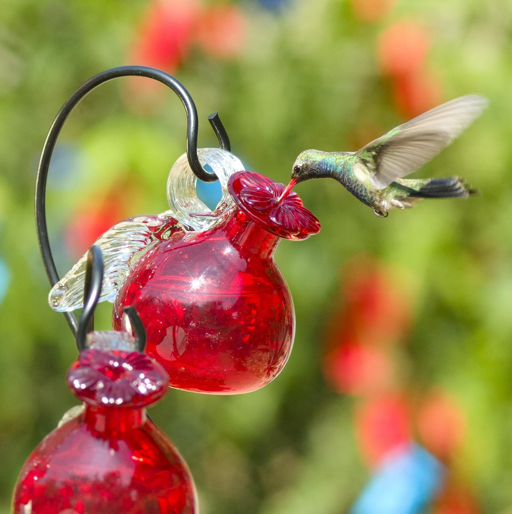 Fall Bird Feeder Wallpaper Pixie Hanging Glass Hummingbird Feeder Yard Envy