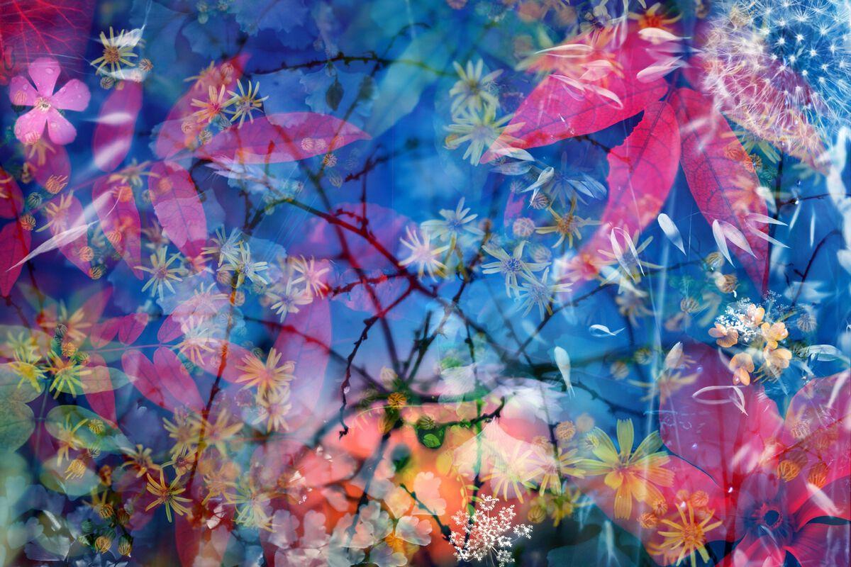 Nature Wallpaper Hd 3d Photographie Le Sacre Du Printemps Luis Mariano Gonzalez