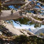 Yosemite-HalfDome-Juniper-YExplore-Backpacking-DeGrazio-Apr2014
