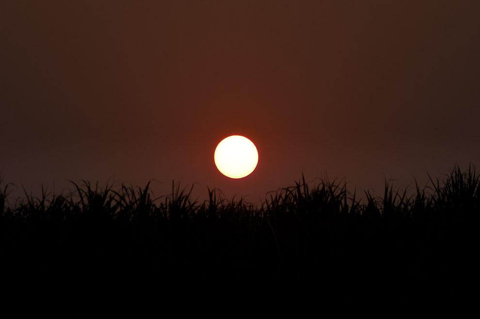 Nuestro cálido sol a punto de ocultarse en el horizonte dibujado por las plantaciones de caña de Azúcar cerca de la ruta 8 camino a Colonia Independencia en la tarde del domingo 19 de Setiembre. (Elton Núñez - Colonia Independencia, Paraguay)