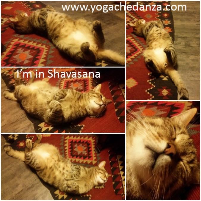 yoga gatto ernesto shavasana