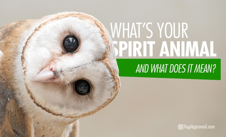 Common Spirit Animals and What They Symbolize