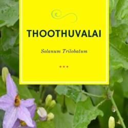 Thoothuvalai