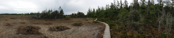 Petrel Point Fen, Bruce Peninsula
