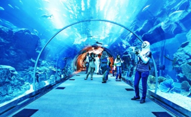 Underwater Zoo And Aquarium In The World S Largest