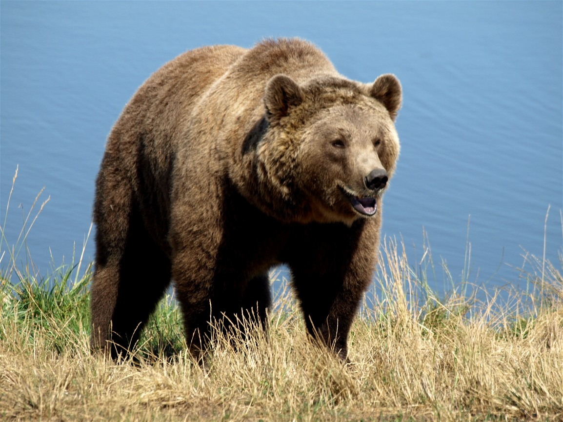 Grizzly Bear Your Hike Guide