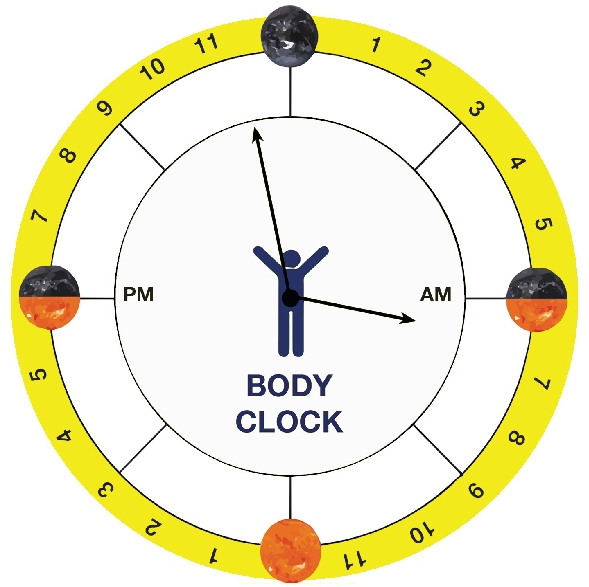 Make your own body clock You and Your Hormones from the Society - clock templates