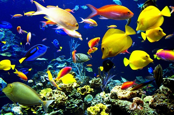 Learn about exotic freshwater fish - Fish compatibility chart Your