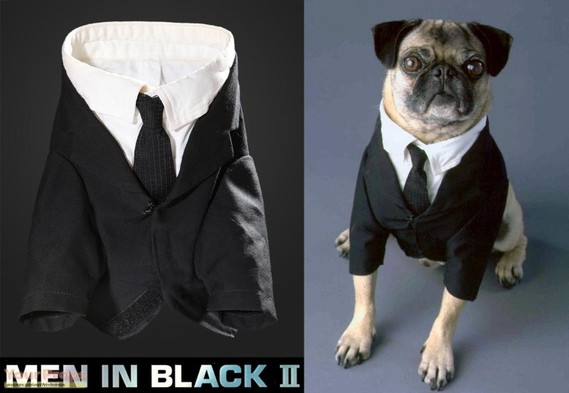 Large Of Pug In Costume