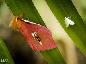 Moths on a leaf