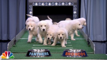 Puppies predict the winners