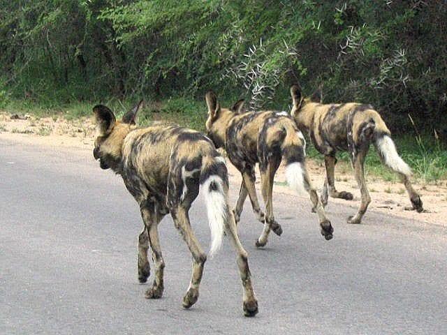 Kruger National Park South Africa Photo Essay