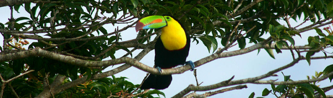 Yucatan Bird Guide List and Photos Birding at Hacienda Chichen