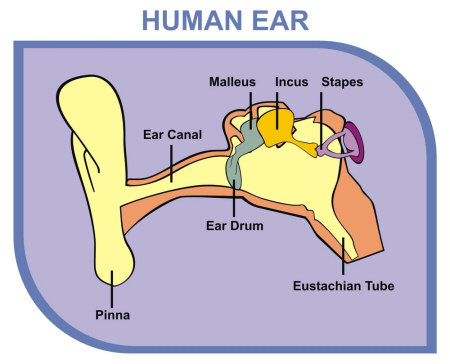 Earaches - Causes and Treatments
