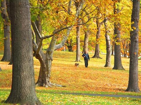NY- Cenral Park North Meadows- Autumn Colors- Man and Dog