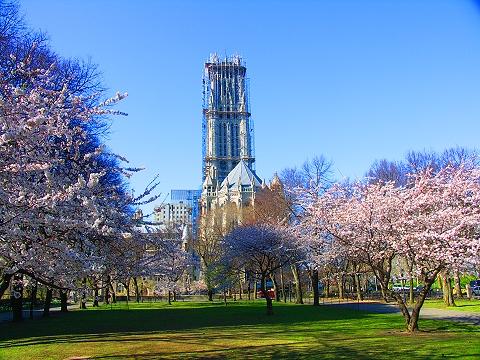 NY- Sakura Park Cherry Blossoms, Riverside Cathedral