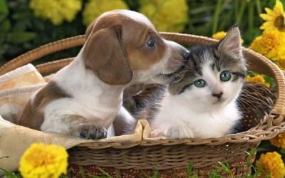 Puppy and kitten Desktop wallpapers 1440x900