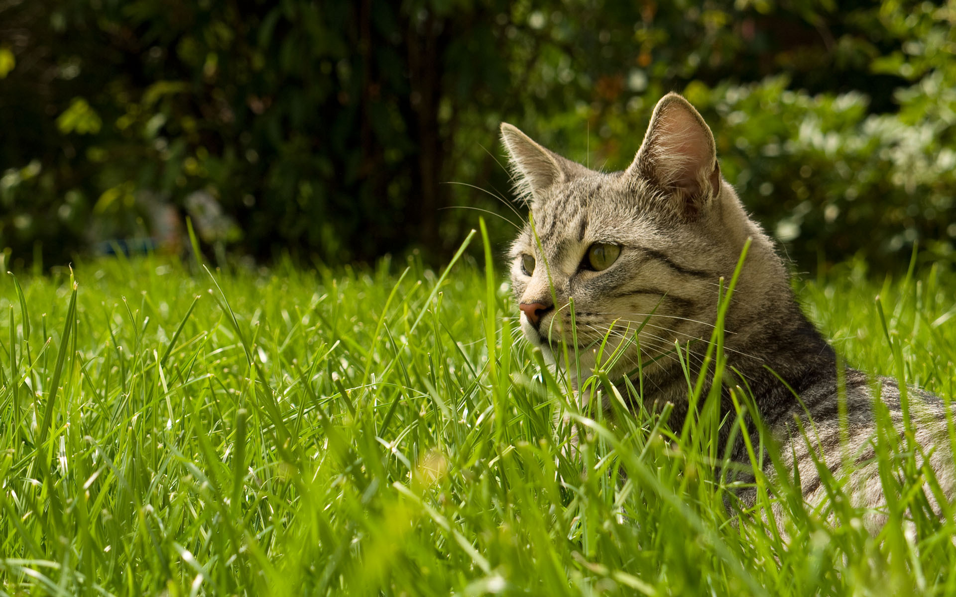 Cute Lovable Couple Wallpapers Find The Cat In The Grass Wallpapers And Images