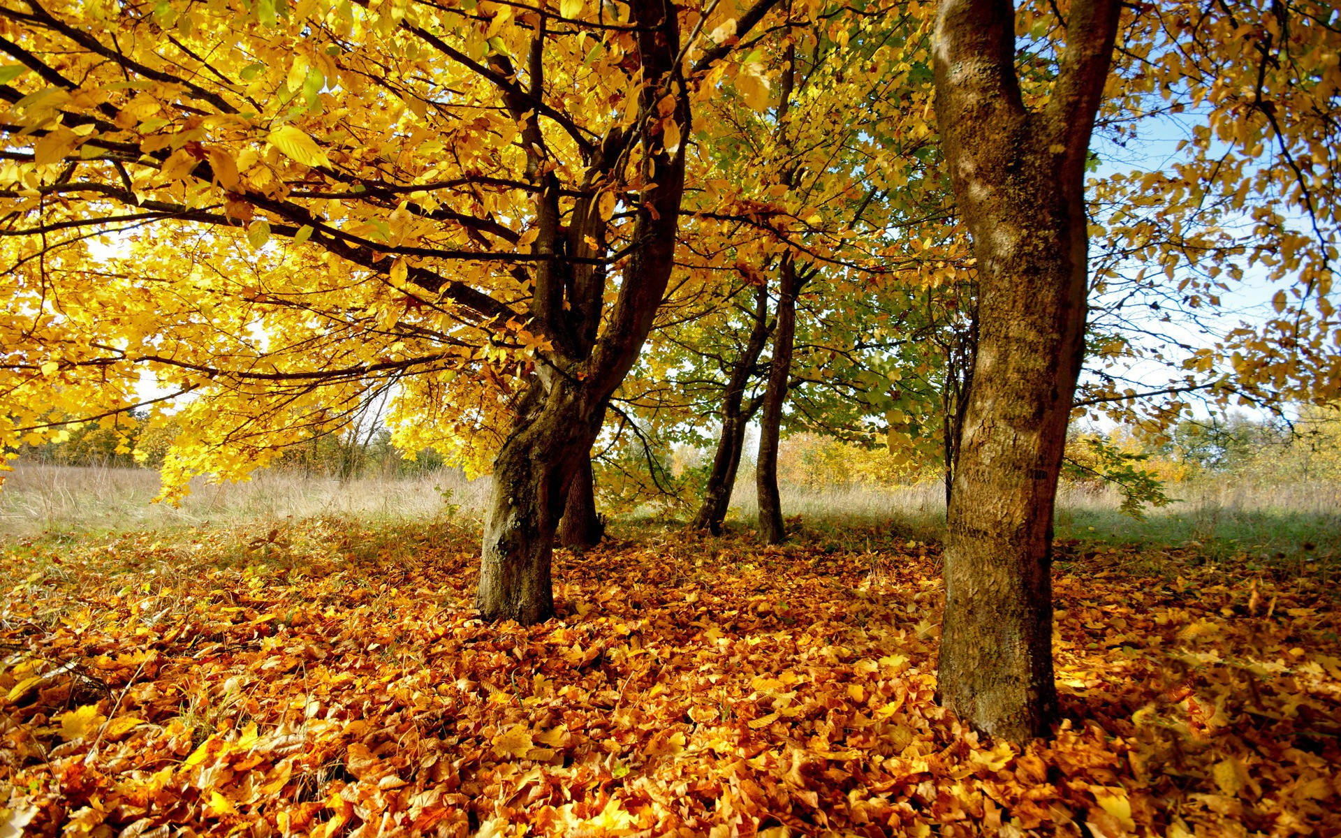 Fantasy Forest 3d Desktop Wallpaper Autumn Yellow Listopad Wallpapers And Images Wallpapers