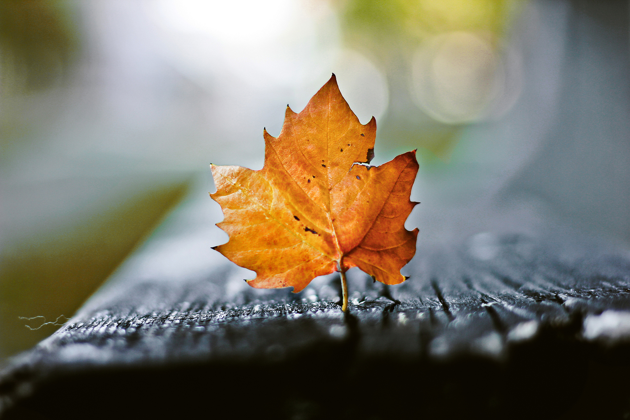 Galaxy S4 Fall Wallpaper Bench Macro Leaf Wallpapers And Images Wallpapers