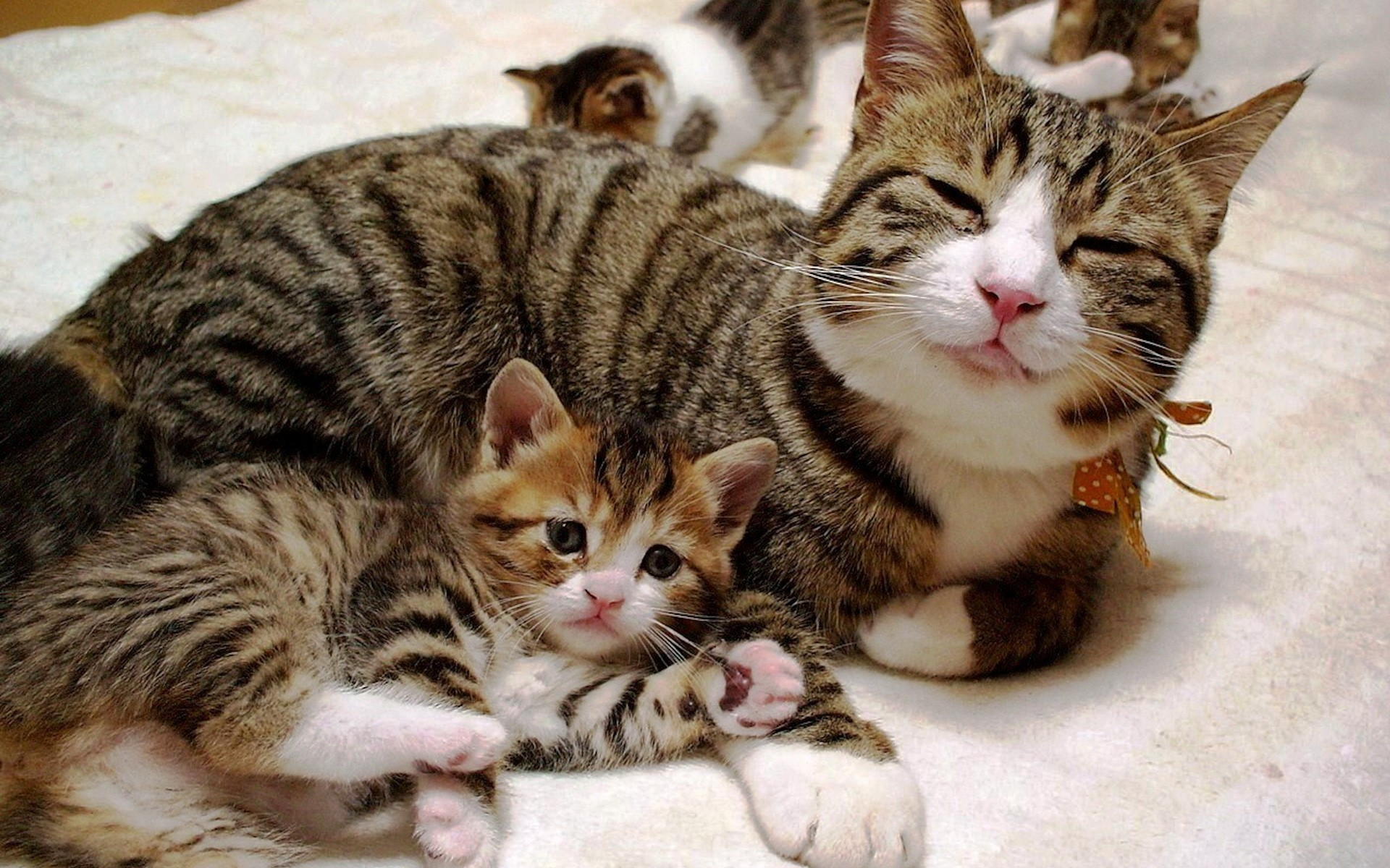Cute Hug Day Wallpapers Satisfied Cat With A Kitten Wallpapers And Images