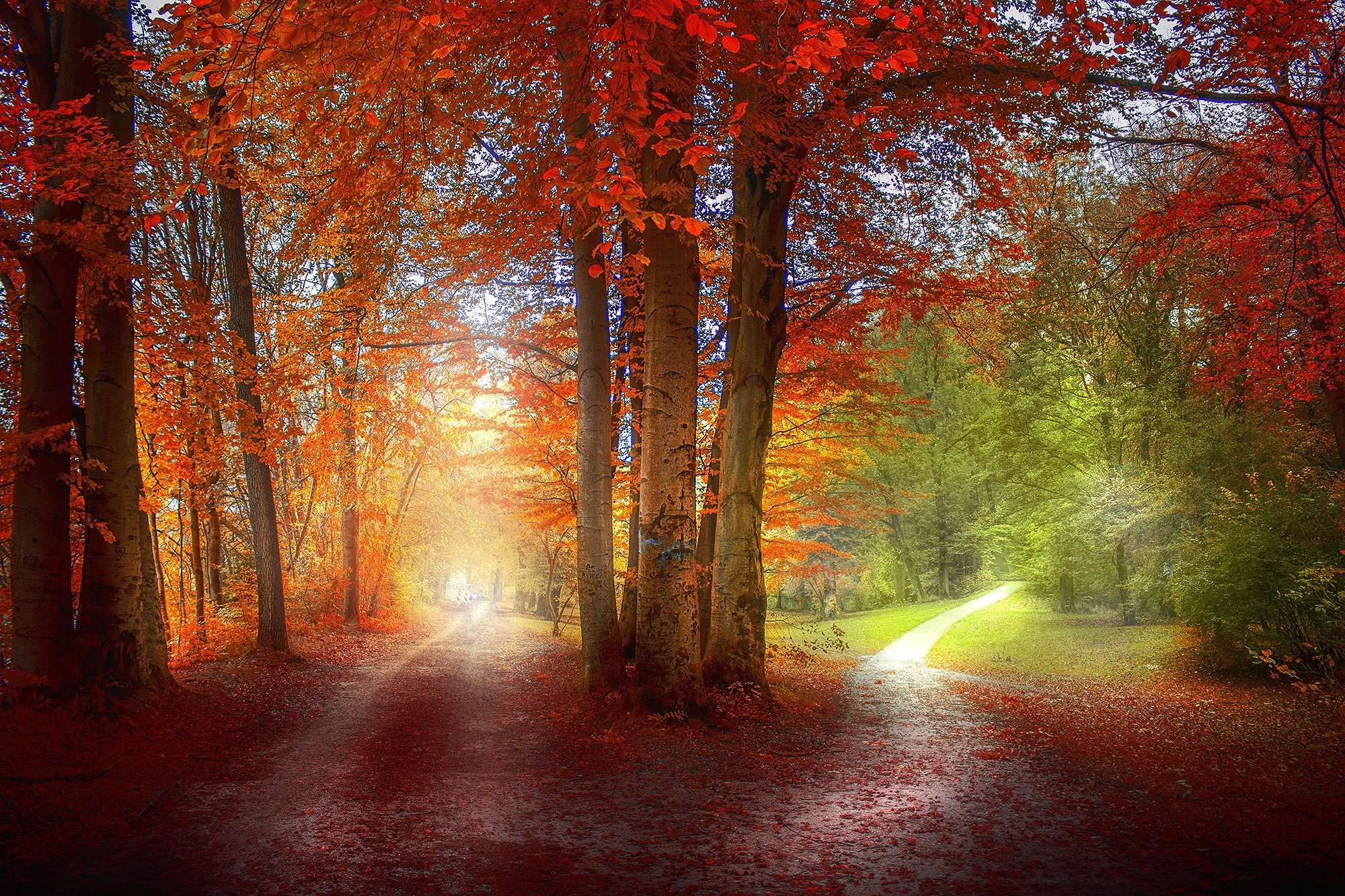 Free Widescreen Wallpaper Fall Two Tracks In The Autumn Forest Wallpapers And Images