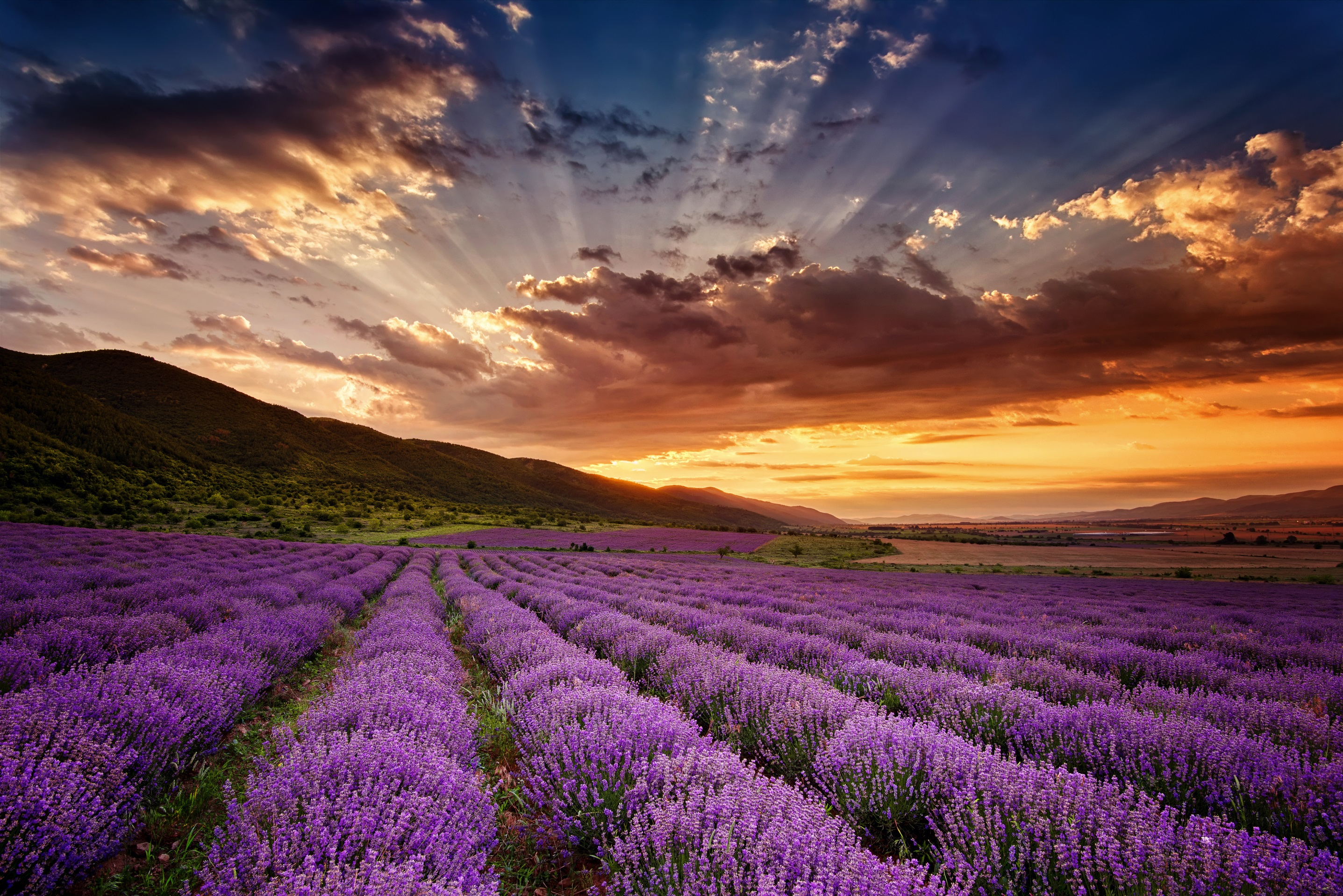 Falling Down Flowers Wallpaper The Many Ways To Use Lavender Zen Box Essential Oils