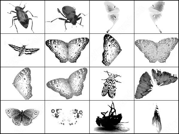 Butterfly free photoshop brush Download Free Vectors graphic design