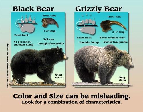 black_grizzy-id