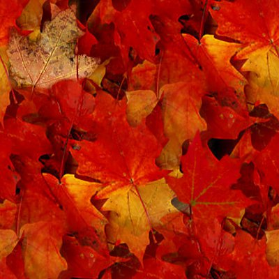 Animated Falling Leaves Wallpaper Autumn Maple Leaves Seamless Texture Background Image