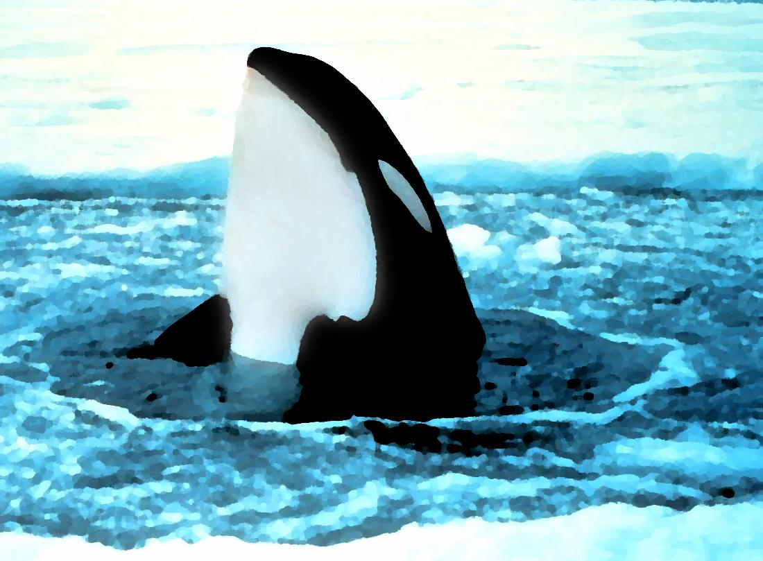 Cute Orca Wallpaper Orca Popping Out Of Ice Painting Background Image