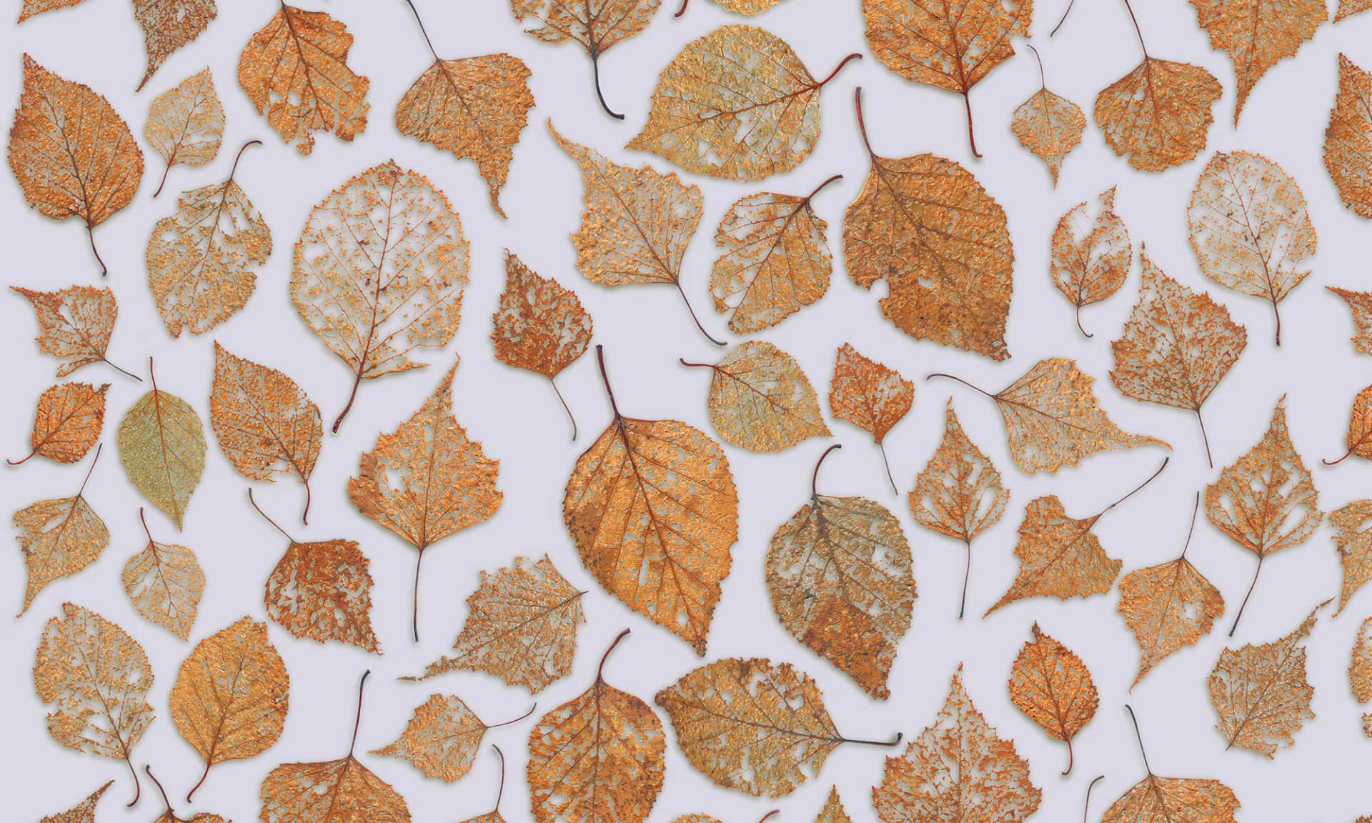 Fall Foliage Computer Wallpaper Zo 235 Design Nature Wallpaper All Things Natural For Walls