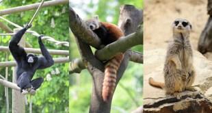 Les changements 2017 au Zoo de Lille