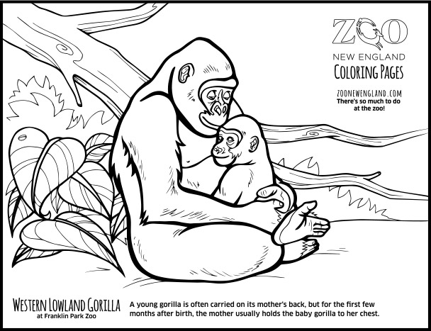Zoo New England Coloring Pages 89
