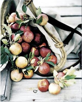 apples_mikkelvang