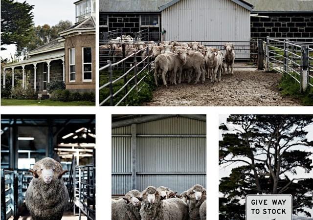 owcza-farma