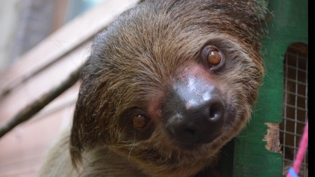 Videos Of Sloths Moving