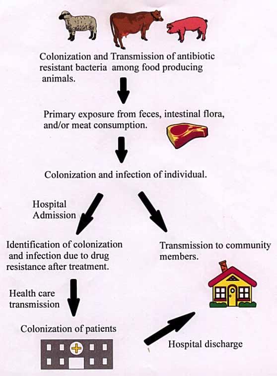 Effects of Antibiotics on Animal Feed - Presentation