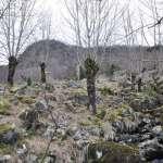 V&A Tree Search