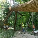 Chop Stick tree horizontal (Image Courtesy Donna Sink)
