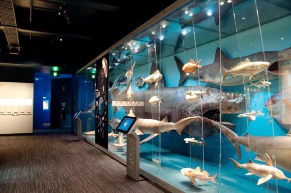 South Australian Museum Biodiversity Gallery