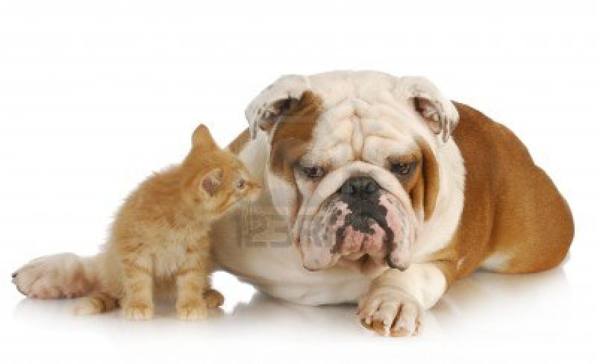 Cute Kitty Cat Wallpapers Dessins En Couleurs 224 Imprimer Chien Num 233 Ro 181527