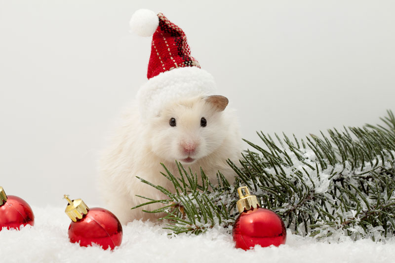 Cute Parakeet Wallpaper 12 Portraits Of Pets In Christmas Costumes The