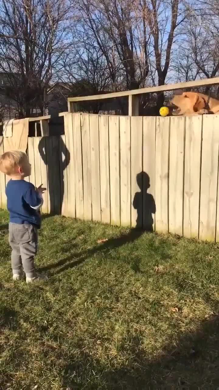 Backyard Fence Adorable Toddler Plays Fetch With Dog Despite Backyard Fence Video