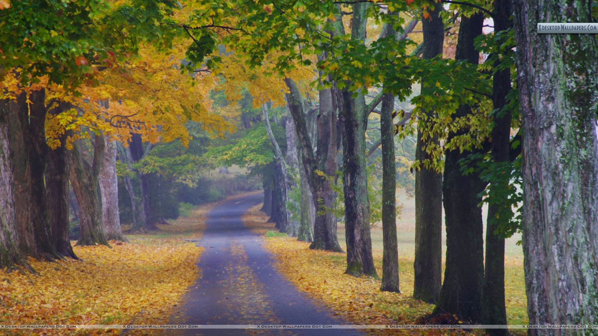 Wallpaper Louisville Journey Into Fall Louisville Kentucky Wallpaper
