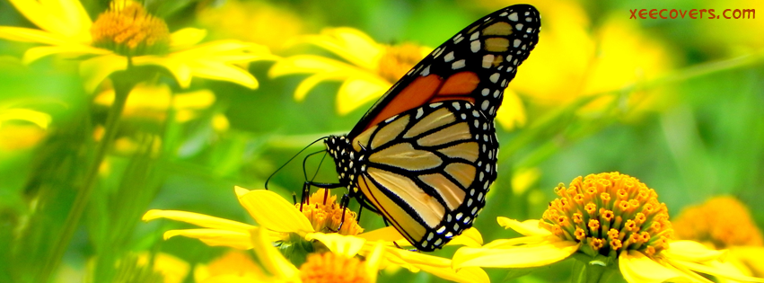 Download Sad Girl Wallpaper With Quotes Butterfly Getting Feed From Flowers Fb Cover Photo Xee