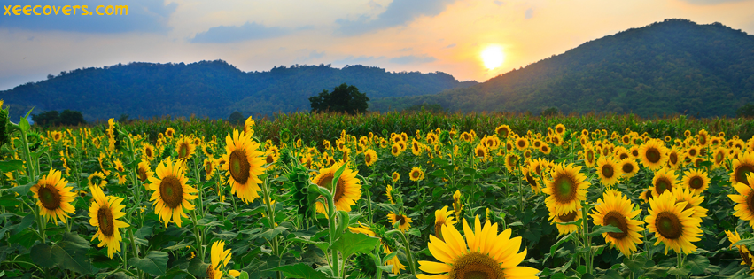 Fall Desktop Wallpaper With Crush Quotes Sunrise Scene With Beautiful Sun Flowers Fb Cover Photo